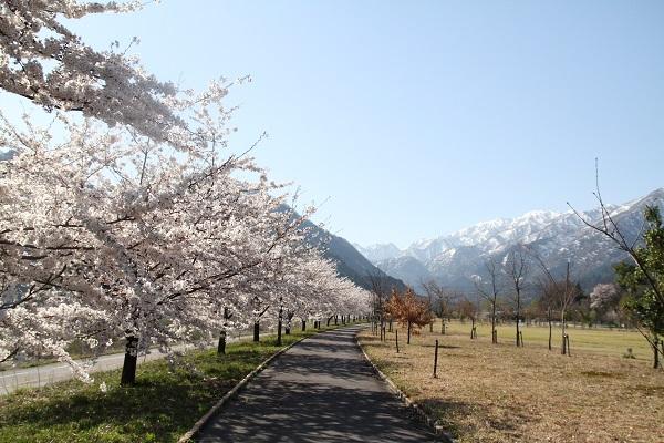 4.15内山公園.JPG